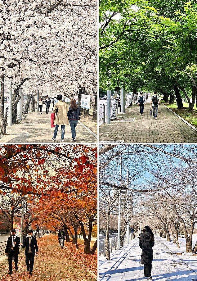 16. Aynı yer, dört farklı mevsim.