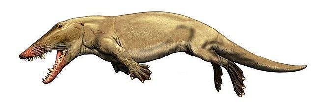 47 milyon yıl önce ise günümüzün Afrika cüce geyiğine benzeyen bir tür ortaya çıktı. Bu toynaklı tür, tehlike sezdiğinde ya da yiyecek bulması gerektiğinde suya girebiliyordu.