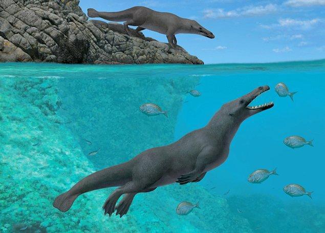 Aradan geçen 5 milyon yıl içerisinde balinalar suya adapte olmak için oldukça büyük değişimlere uğradı.