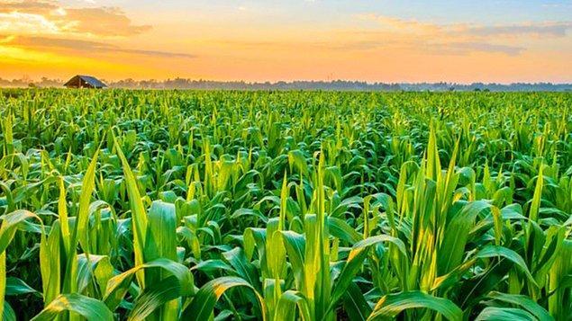 6. Aşağıdaki tarım ürünlerinden hangisinin üretiminde Türkiye Dünya'da birinci sıradadır?