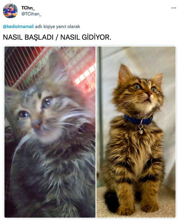 1. Pek çok Twitter kullanıcısı da kendi sahiplendikleri kedilerin inanılmaz değişimini bizlerle paylaştılar: