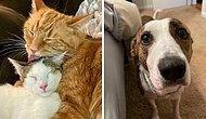 16 самых милых и трогательных фото с животными, которых спасли в прошлом месяце и приютили в их новый дом (Подборка за август)