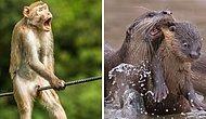 Объявлены победители конкурса комедийной фотографии дикой природы, и вот 15 самых смешных снимков
