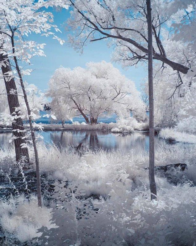 2. Saint-Lawrence Nehri'nin yanında oluşan göletin ve ağacın uyumu...