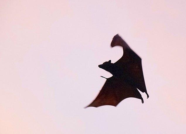 9. Vampir hikayeleri yarasalardan ilham alınarak ortaya çıkmamıştır.