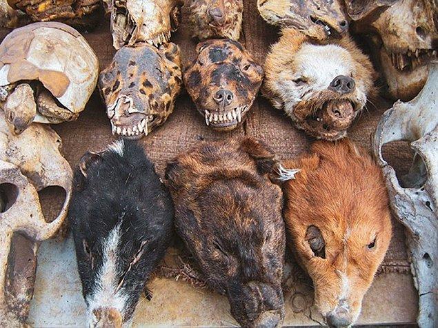 5. Batı Afrika'da yer alan Togo'daki Lome Voodoo Pazarı