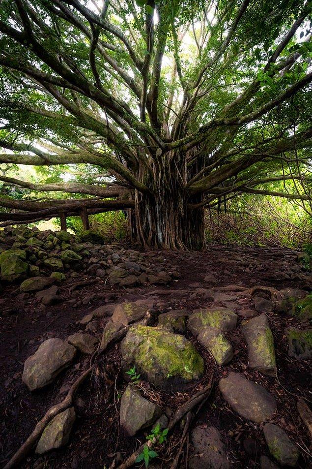 13. Hawaii - Maui Adası: