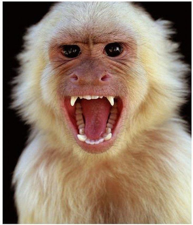 10. Maymun