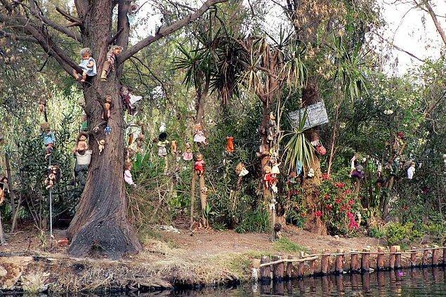 Meksika'da terk edilmiş bir adanın ağaçlarını, takıntılı bir babanın oyucak bebek koleksiyonu süslüyor!