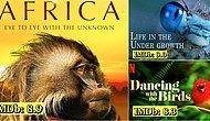 Dünyayı Başka Bir Gözle Göreceksiniz: Hayvanlarla İlgili En İyi Belgeseller