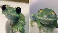 16 очаровательных и забавных фотографий лягушек, которые сделают ваш день лучше