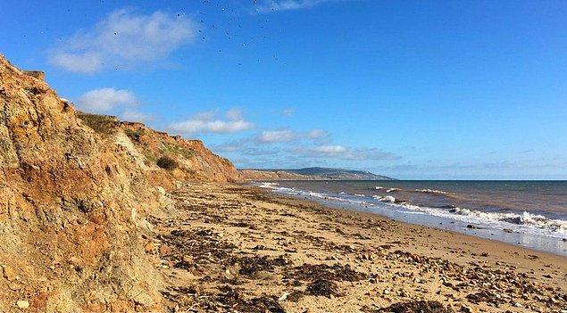 Kemikler Brightstone yakınlarındaki bir sahilde yedi yıllık bir süreçte bulundu.