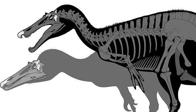 İkili aynı zamanda bariyoniks türüyle aynı dönemde yaşamış olabilir.