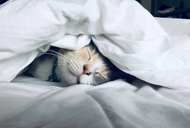 3. Kedilerin mırlaması onların kas ve kemik sistemlerini geliştirir.