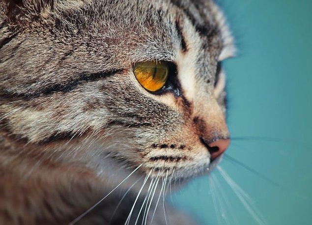 24. Kediler patilerinden terleyebilirler.