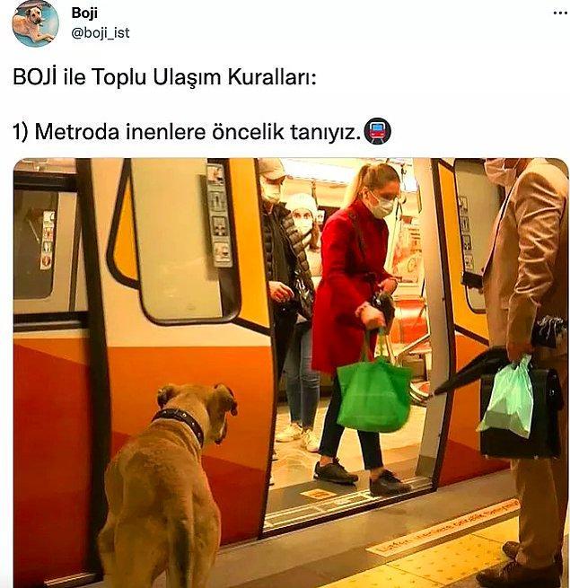 İstanbul Büyükşehir Belediyesi ekipleri Kangal çoban kırması olan Boji'yi sahiplenmişti ve geçtiğimiz aylarda da başına bir iş gelip gelmediğini kontrol etmek için de çip takılmıştı.
