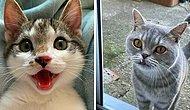 15 милых случаев, когда владельцы кошек были очарованы их зубками