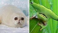 25 самых милых и глупых гибридов животных, которые определенно сделают ваш день (Новые фото)