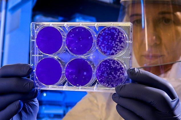 10. Zararlı bakterileri öldürmeye yardımcı olmak için insan vücuduna bakteriyofaj virüsleri enjekte edilebilir.