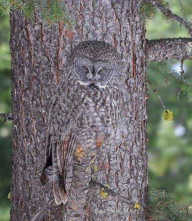 4. Baykuşu görebiliyor musunuz?