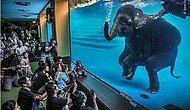 10 снимков победителей самого престижного конкурса фотографов дикой природы за 2021 год