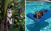 15 самых забавных фото животных, которые застряли и нуждались в помощи человека